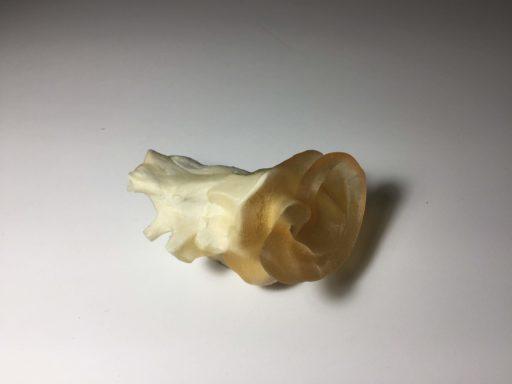 Adult Ear Phantom